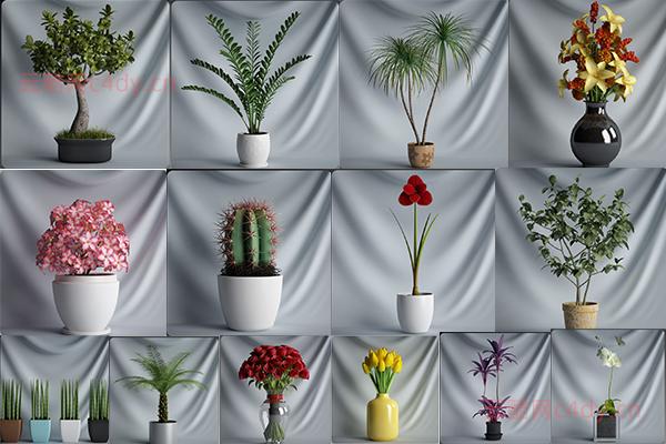 云酷网C4D模型-20套植物盆栽
