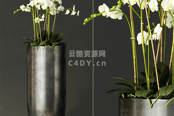 室内植物菊花-室内室内盆栽菊花植物,C4D竹子菊花模型-云酷网c4d