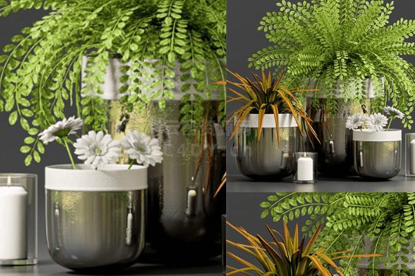 室内植物-室内室内盆栽植物06,C4D菊花模型-云酷网c4d